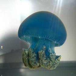 Medusa viva blue blubber jellyfish catostylus mosaicus