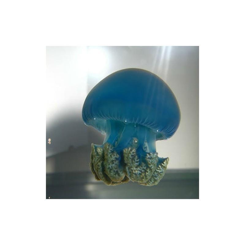 donde comprar medusa viva blue blubber jellyfish catostylus mosaicus