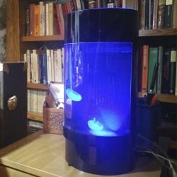 Acuario con medusas vivas para despacho acuariodemedusas.com