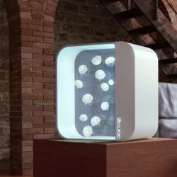 Cubic pulse 80 en venta generacion 2